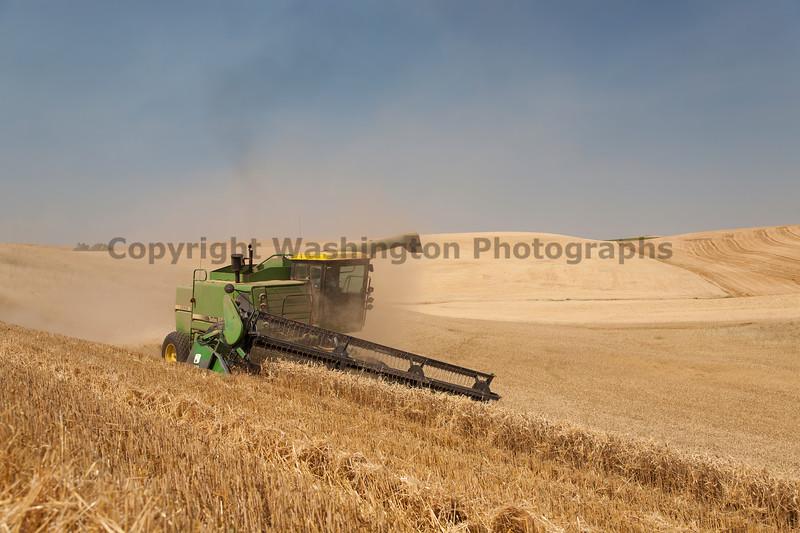 Wheat Harvest 51