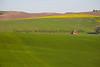 Wheat Fields in Spring 125