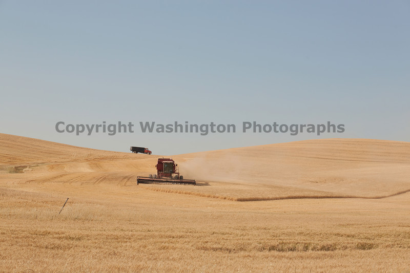 Wheat Harvest 133