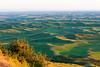 Steptoe Butte Spring 187
