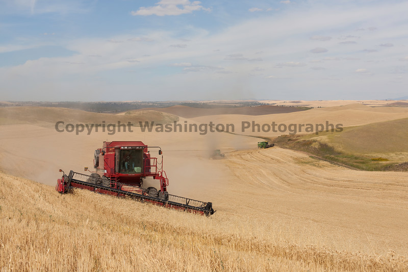 Wheat Harvest 106