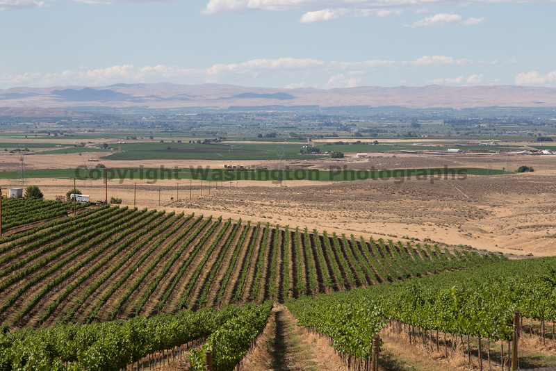 Vineyard - Yakima Valley 11