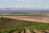 Vineyard - Yakima Valley 11