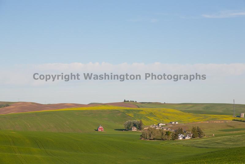 Wheat Fields in Spring 119