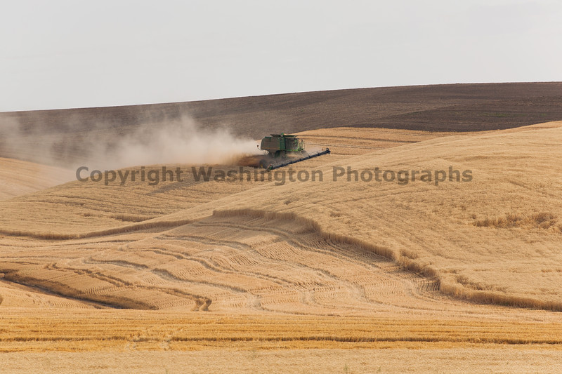 Wheat Harvest 57