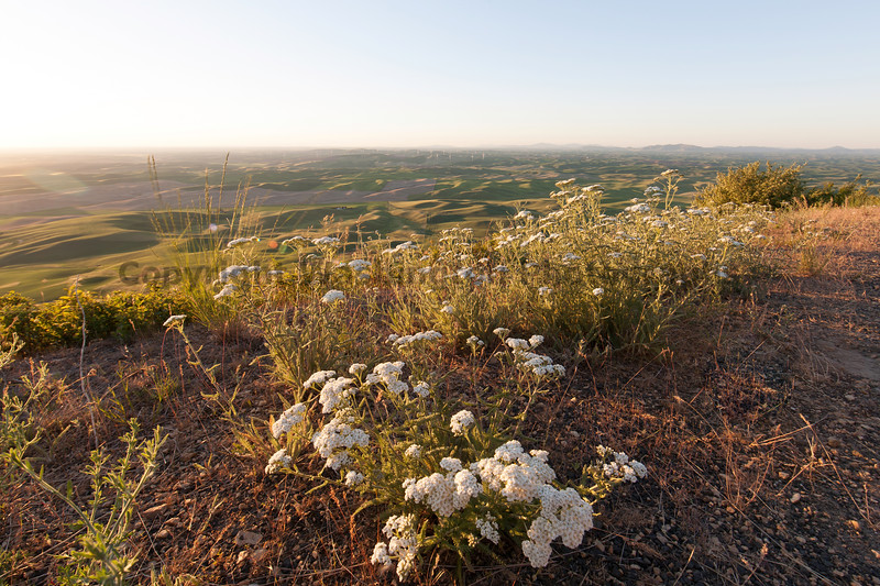 Steptoe Butte Spring 178