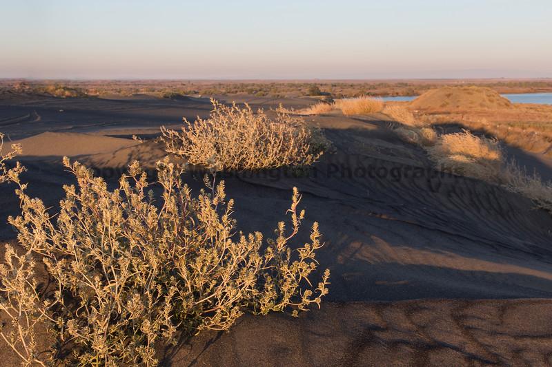 Moses Lake Sand Dunes 20