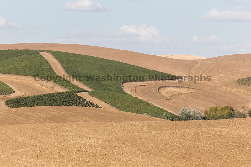Vineyard - Walla Walla 25