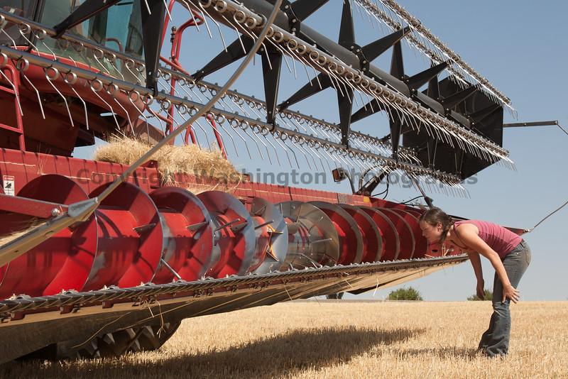 Wheat Harvest 75