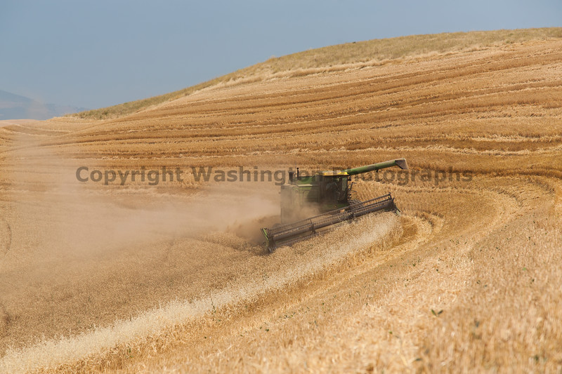 Wheat Harvest 47
