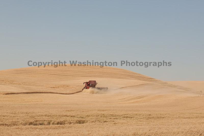 Wheat Harvest 134