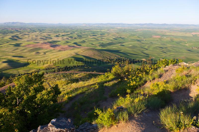 Steptoe Butte Spring 116