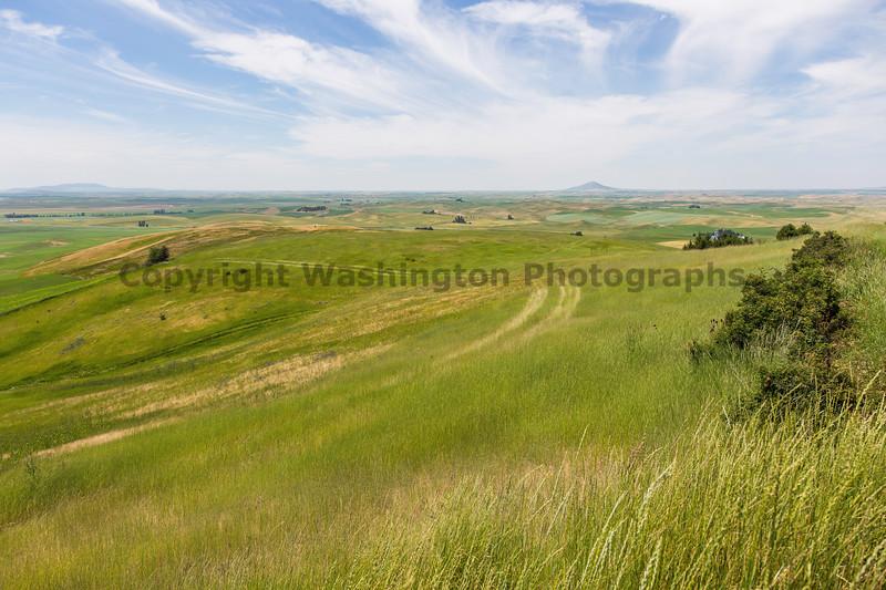 Wheat Fields from Skyline Drive 24