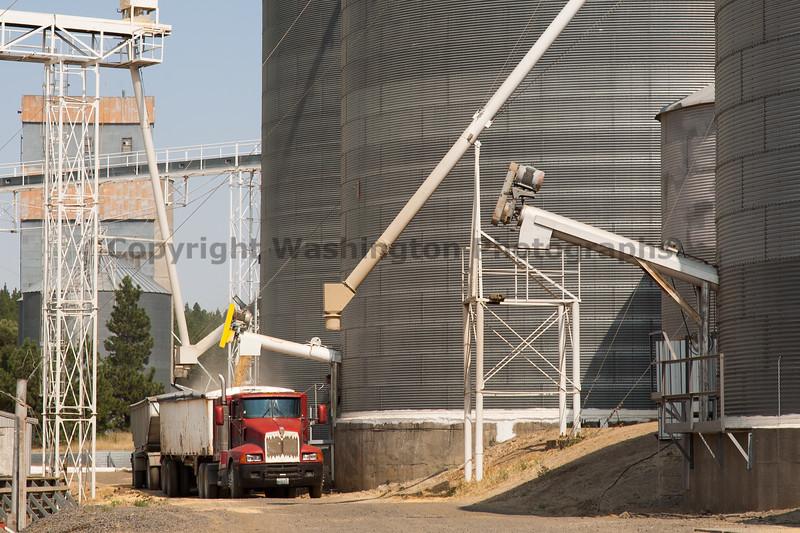 Wheat Harvest 132