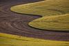 Wheat Fields in Spring 103