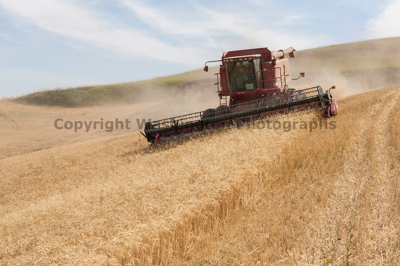 Wheat Harvest 115