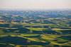 Steptoe Butte Spring 153