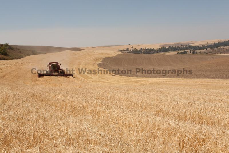 Wheat Harvest 80