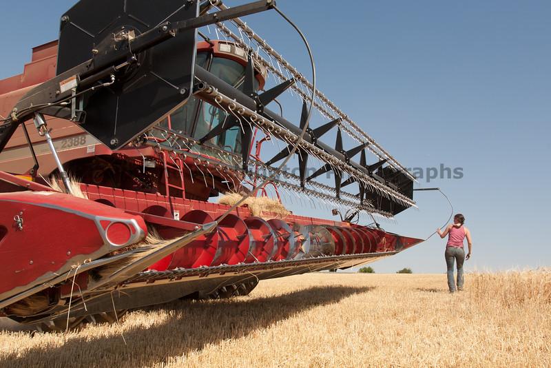 Wheat Harvest 76
