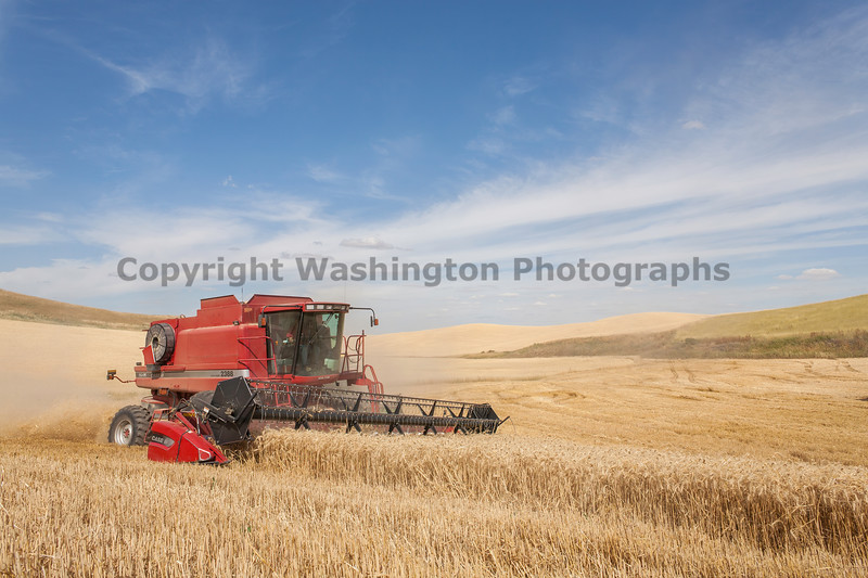 Wheat Harvest 120