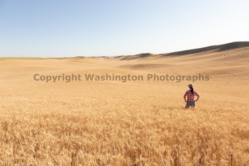 Wheat Farm Girl 285