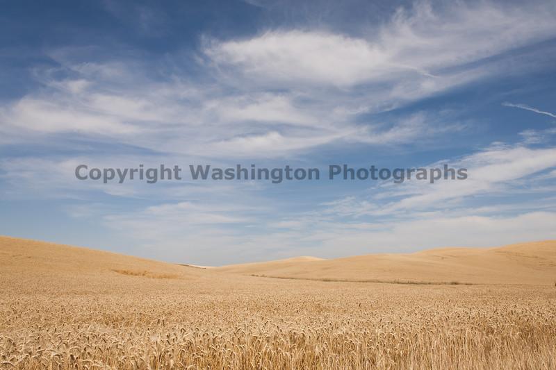 Wheat Fields in Summer 86