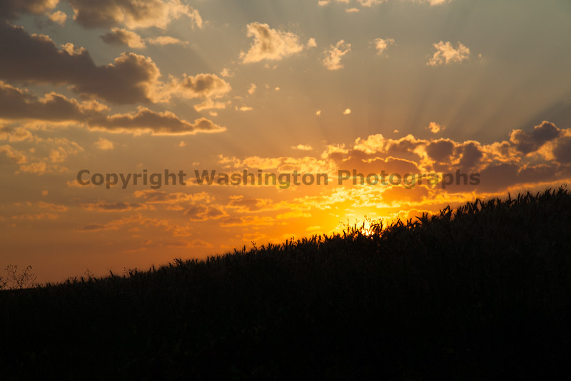 Wheat Fields Sunset 14