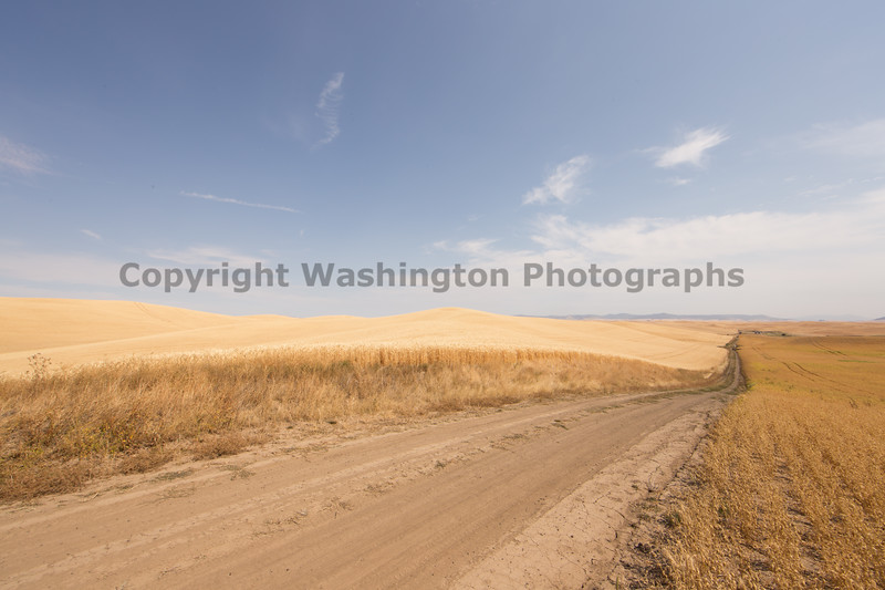 Wheat Fields in Summer 126