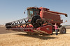 Wheat Harvest 70