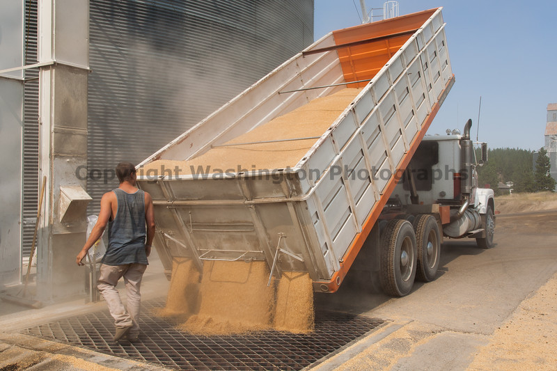 Wheat Harvest 126