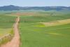 Wheat Fields in Spring 032