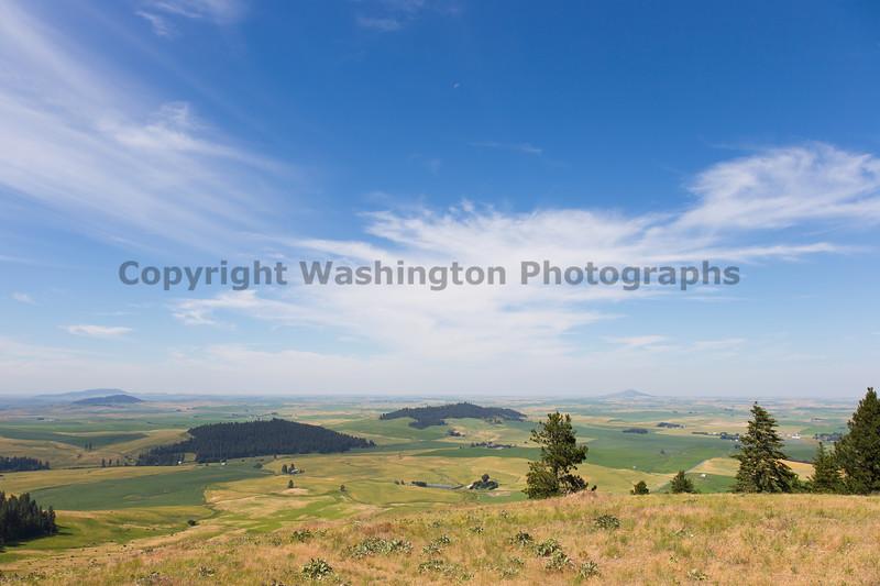 Wheat Fields from Skyline Drive 13