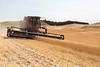 Wheat Harvest 170
