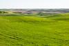 Wheat Fields in Spring 58