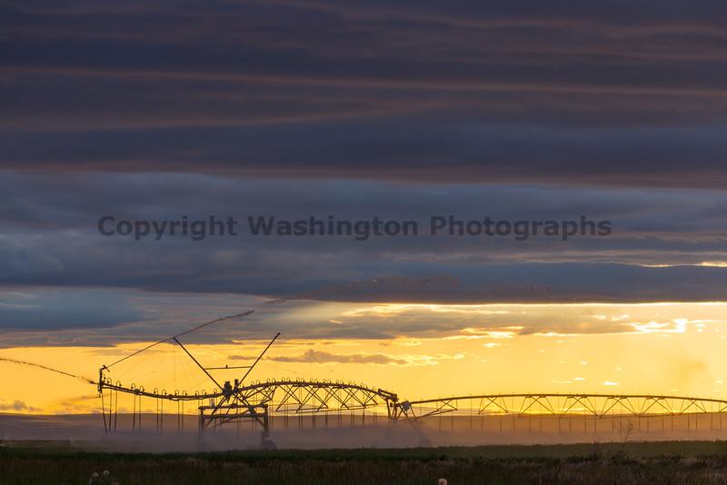 Sprinkler Sunset 14