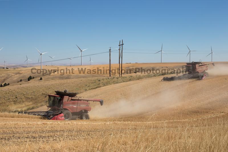 Wheat Harvest 156