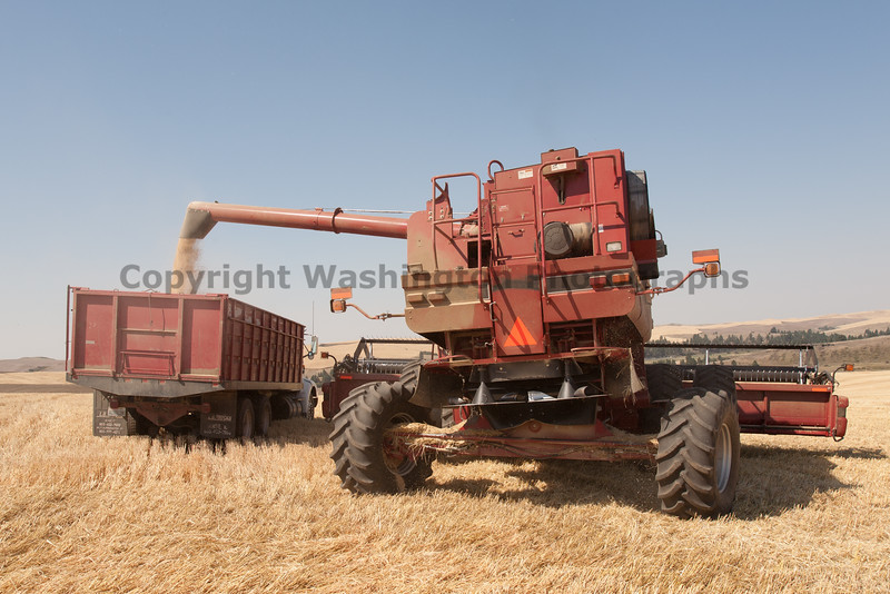 Wheat Harvest 65
