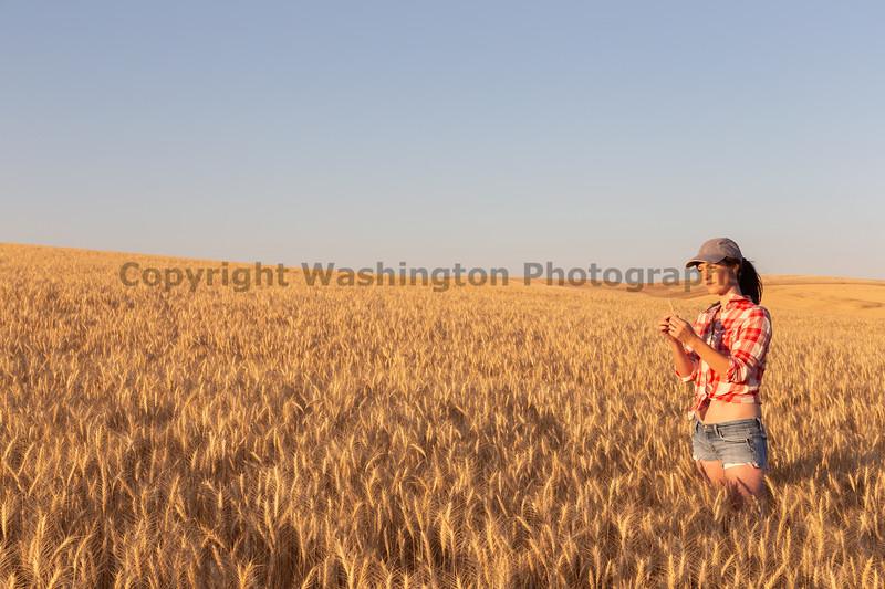 Wheat Farm Girl 271