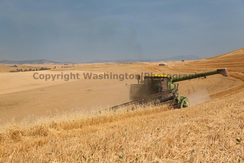 Wheat Harvest 48