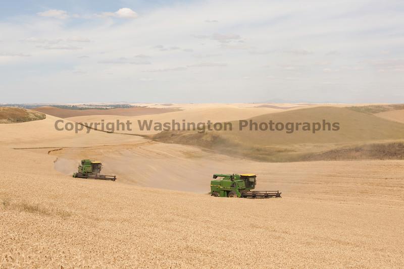 Wheat Harvest 110