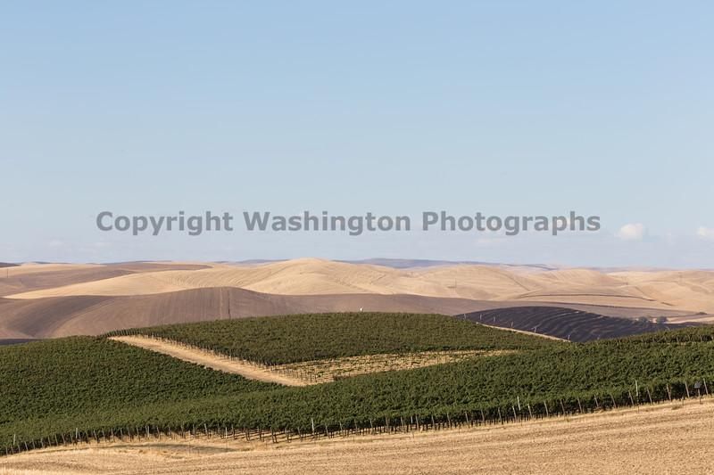 Vineyard - Walla Walla 16