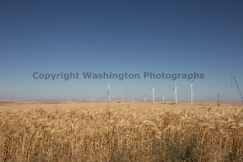 Wheat Harvest 161