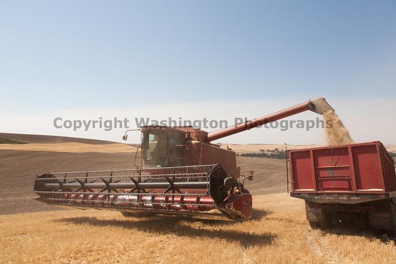 Wheat Harvest 86