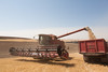Wheat Harvest 86