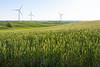 Wind Farm Spring 35