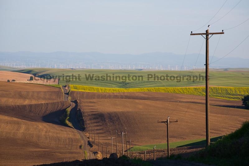 Wheat Fields in Spring 106