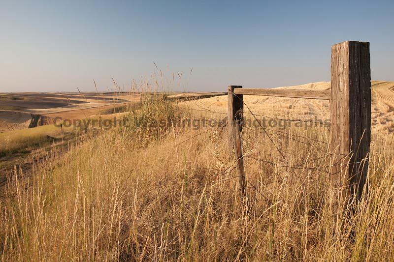 Wheat Fields in Summer 54