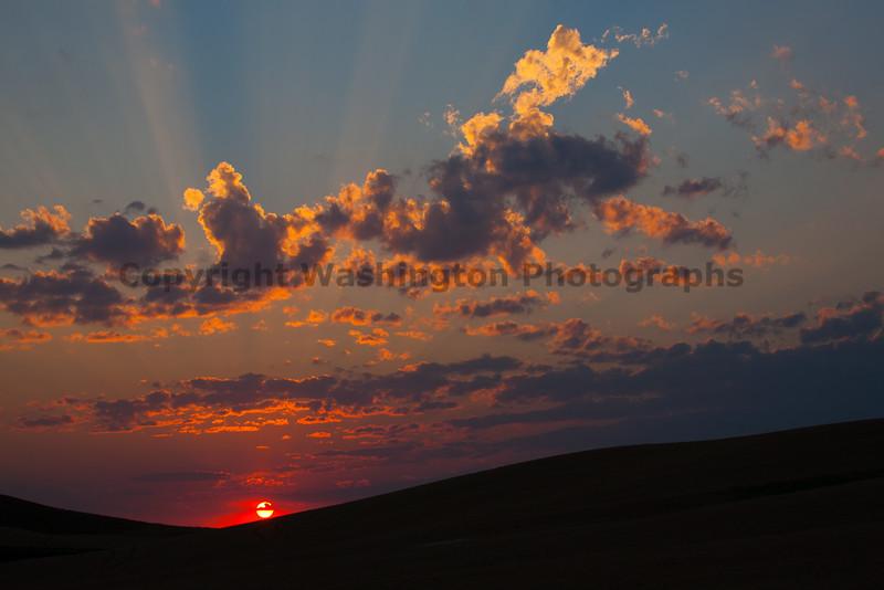 Wheat Field Sunset 20