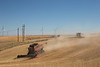 Wheat Harvest 154