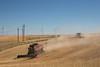 Wheat Harvest 154